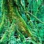 Debt for nature madagascar