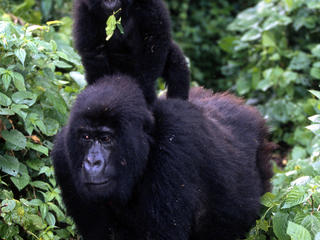 Congo Basin Wildlife Trade