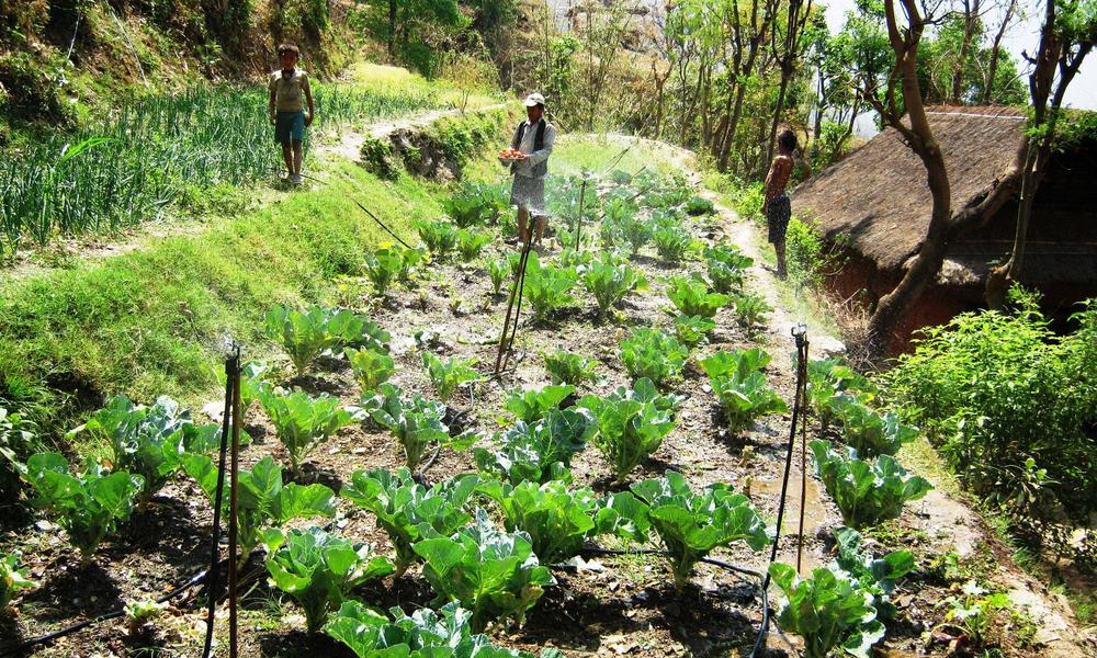 Managing  Water Scarcity