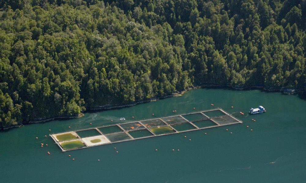 Southern Chile salmon farming