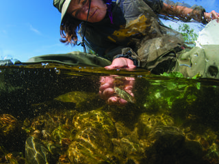 Dr. Carol Ann Woody captures a tiny salmon as part of a comprehensive study of Alaska's fish species.