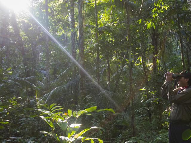 Guide trying to spot monkeys near Cocha Salvador