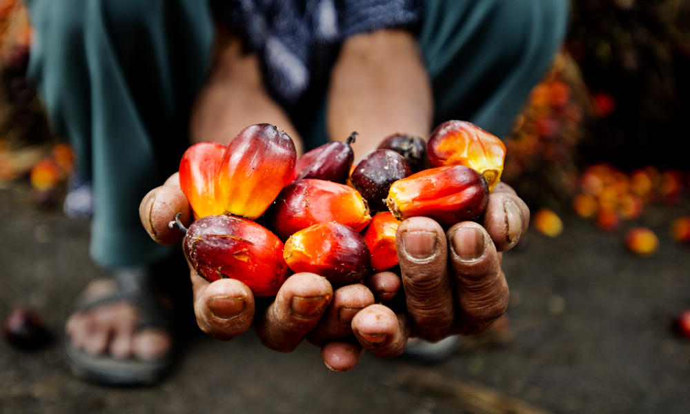 Producing better palm oil for people, profits, and the planet