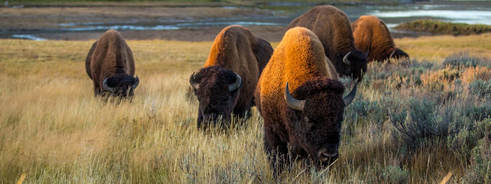american great plains animals - photo #11