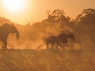 "At dusk, hundreds of elephants move through the brush near the Kwando River's famous ""horseshoe"" bend  in eastern Namibia."