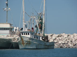 Gulf of California Overfishing