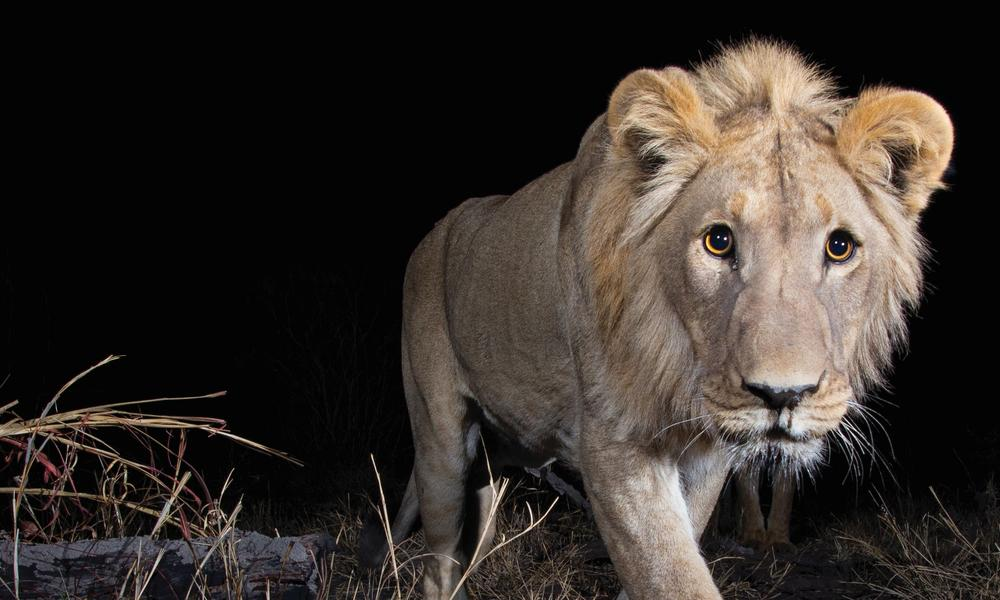 Photographing Africa's most elusive animals | Magazine Articles | WWF