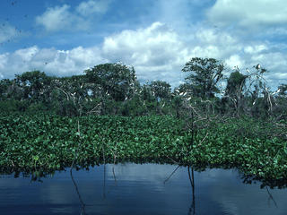 wetlands in Brazil