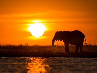 Namibia Elephant_WWF Day Story