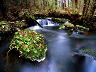 Stream in temperate forest