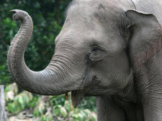 Elephants_8.1.2012_whytheymatter1_hi_247511