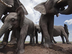 Elephants_8.1.2012_whytheymatter2_xl_287397