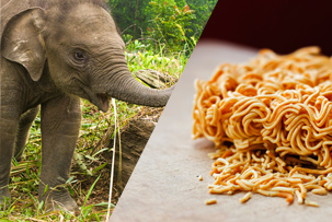 elephant and noodles