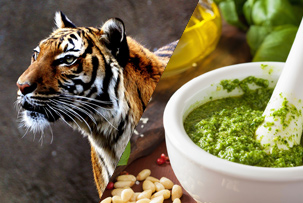 tiger and pesto