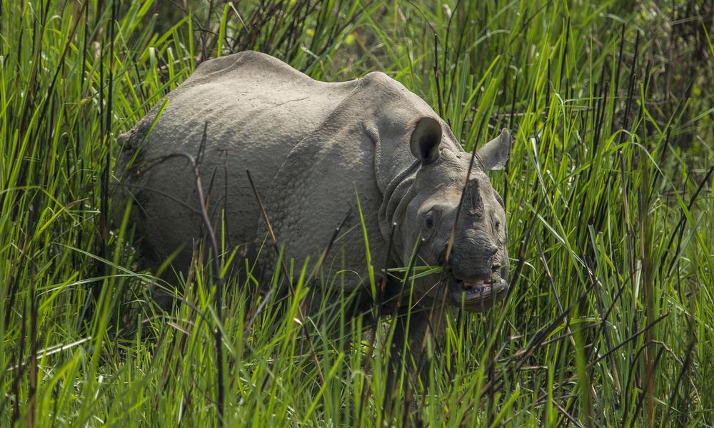 Celebrating an amazing two years of zero rhino poaching in Nepal
