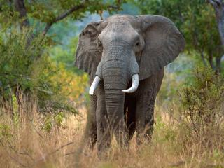 an elephant in Selous reserve