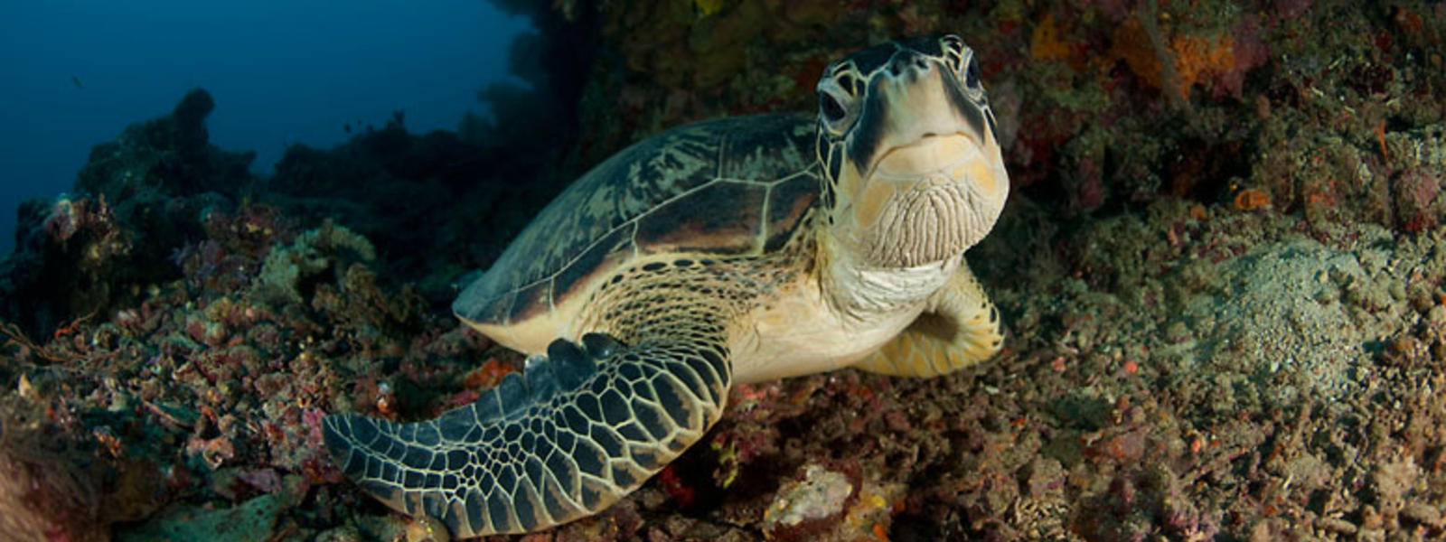 Infographic: Sea Turtles | Pages | WWF