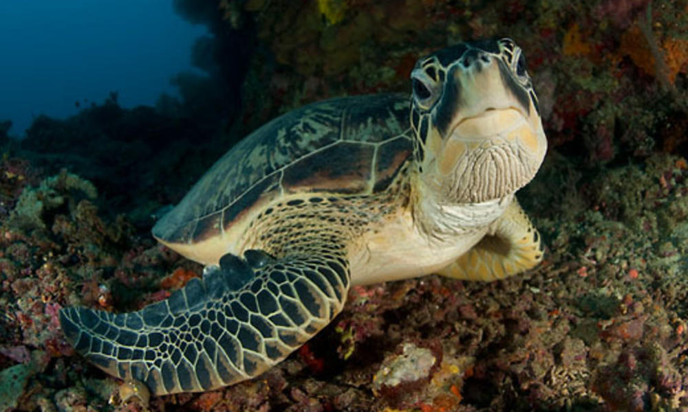 Infographic Sea Turtles Pages Wwf