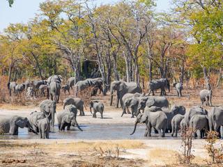 elephants at watering hole, Namibia