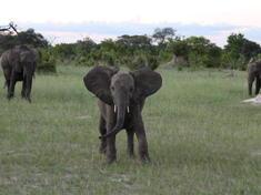 Simbabwe projektreise 2016img 0250 c philipp goeltenboth wwf