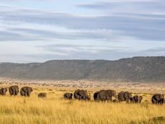 Poachingkenya 06 magfa2016 c5a3063
