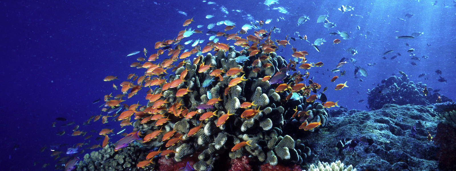 Ocean habitat habitats wwf for How many fish are in the ocean