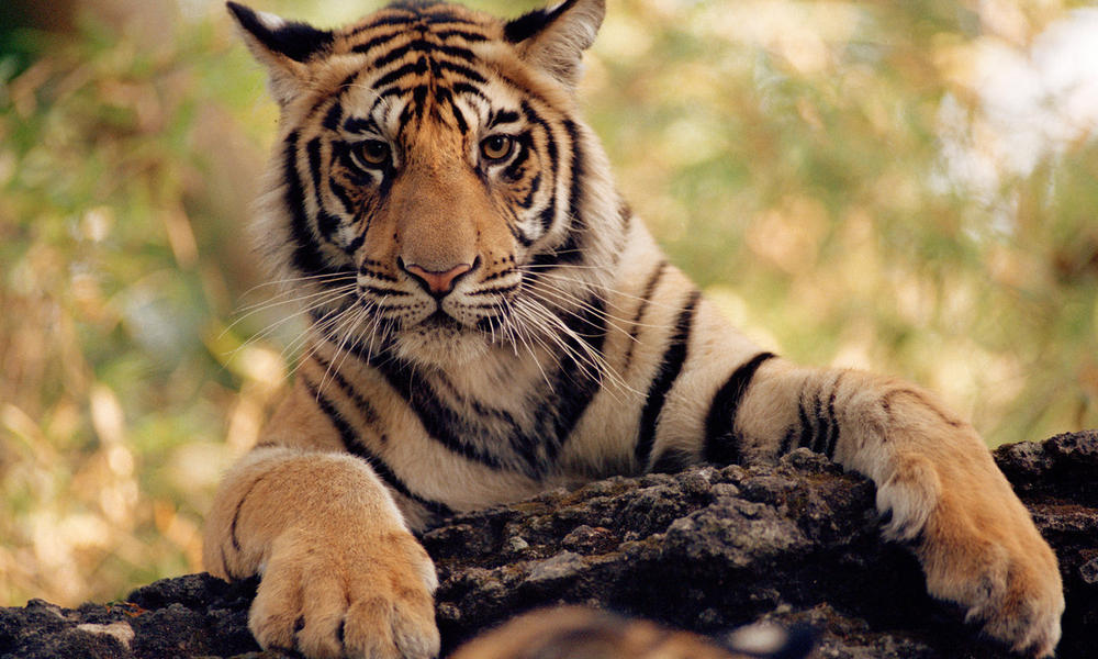 wwf and discovery communications join to protect critical