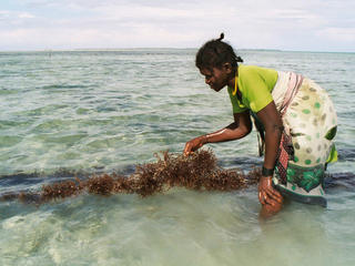a woman harvesting seaweed in Tanzania
