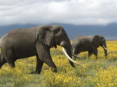 Elephants_8.1.2012_whytheymatter3_hi_258595