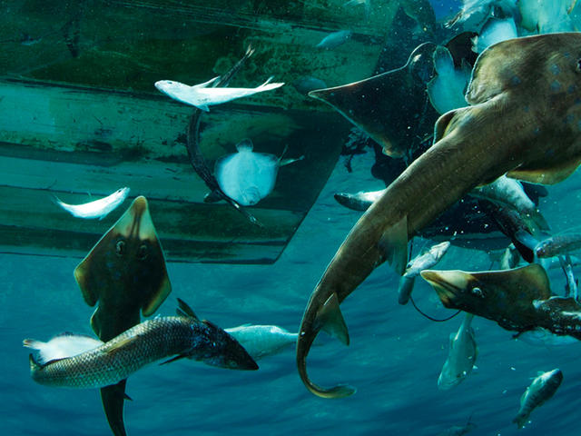 Bycatch Thrown Overboard, Mexico