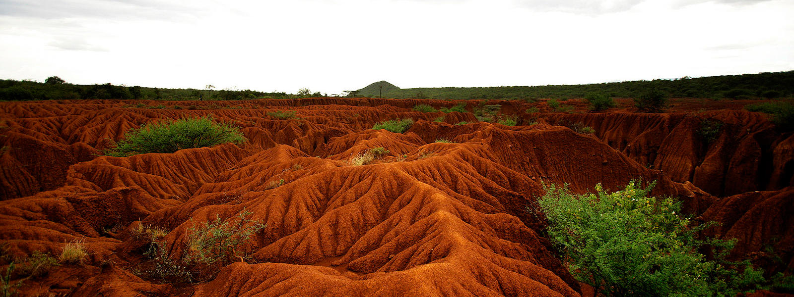 Soil erosion and degradation threats wwf for Soil and water facts