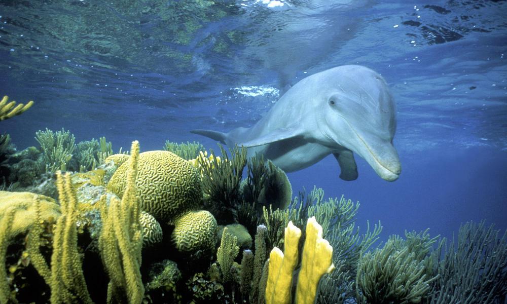 Update: Belize suspends oil exploration near threatened World