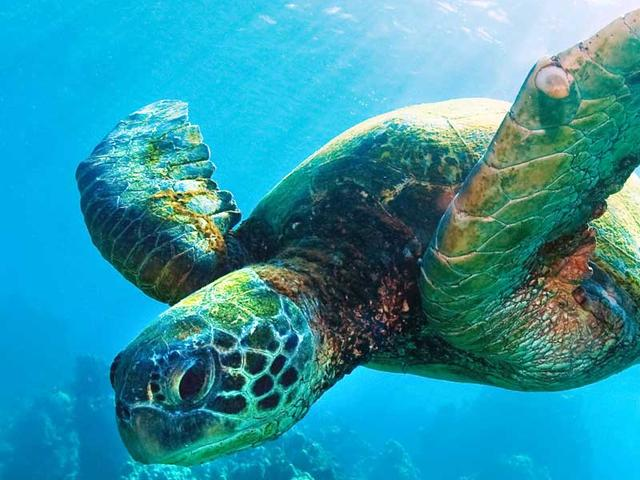 I want to work with sea animals, where do I start.?