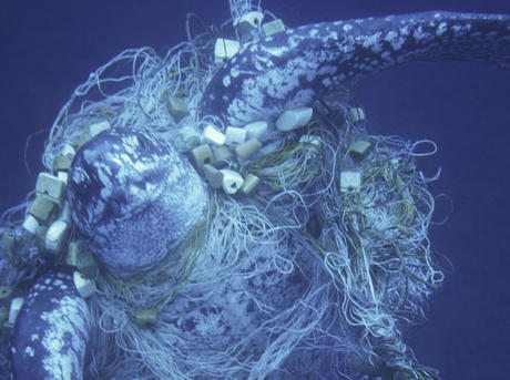 Marine Turtles Bycatch