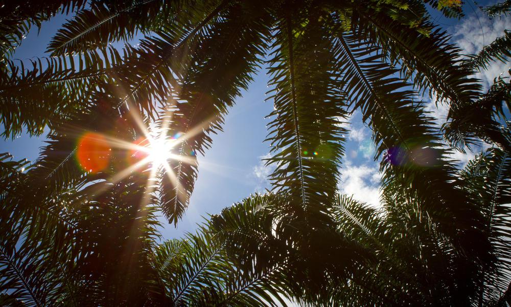 palm tree leave