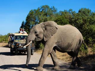 tourists watch an elephant