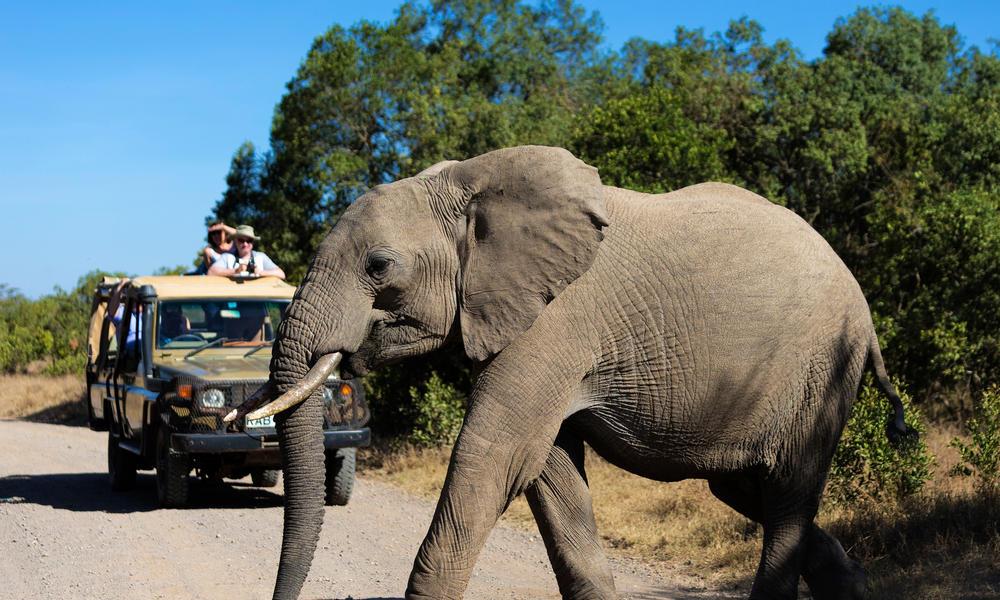نتيجة بحث الصور عن 30,000 elephants killed in Africa in 2016, study finds