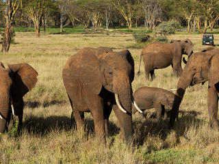 tourists watch elephants