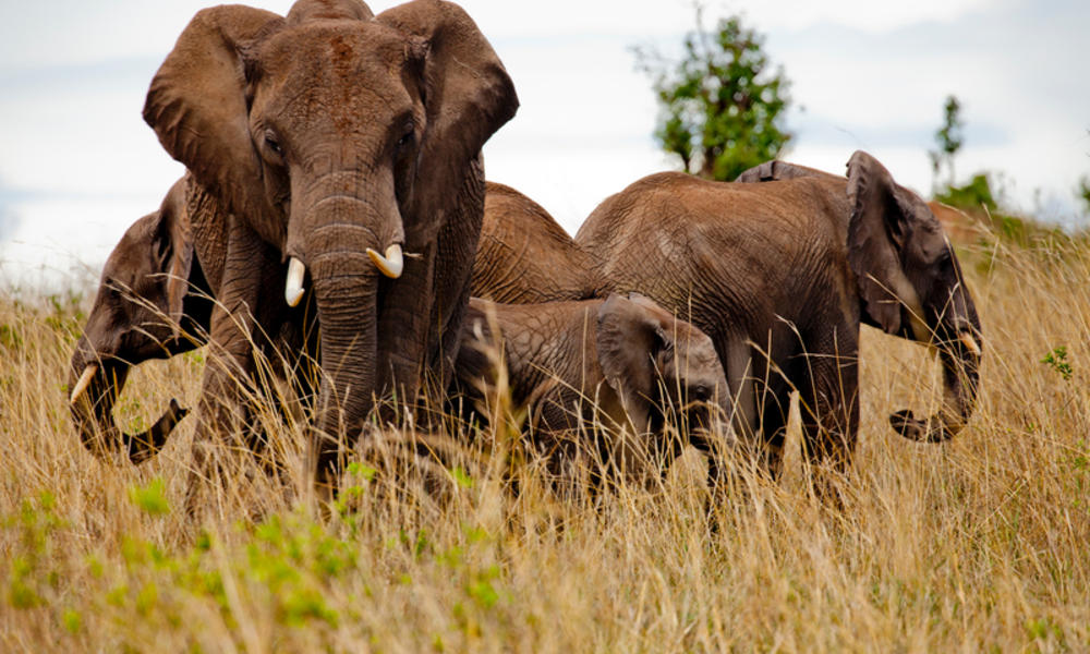 6a9c871e6a58c5 Tracking elephants in Kenya to prevent human-wildlife conflict ...