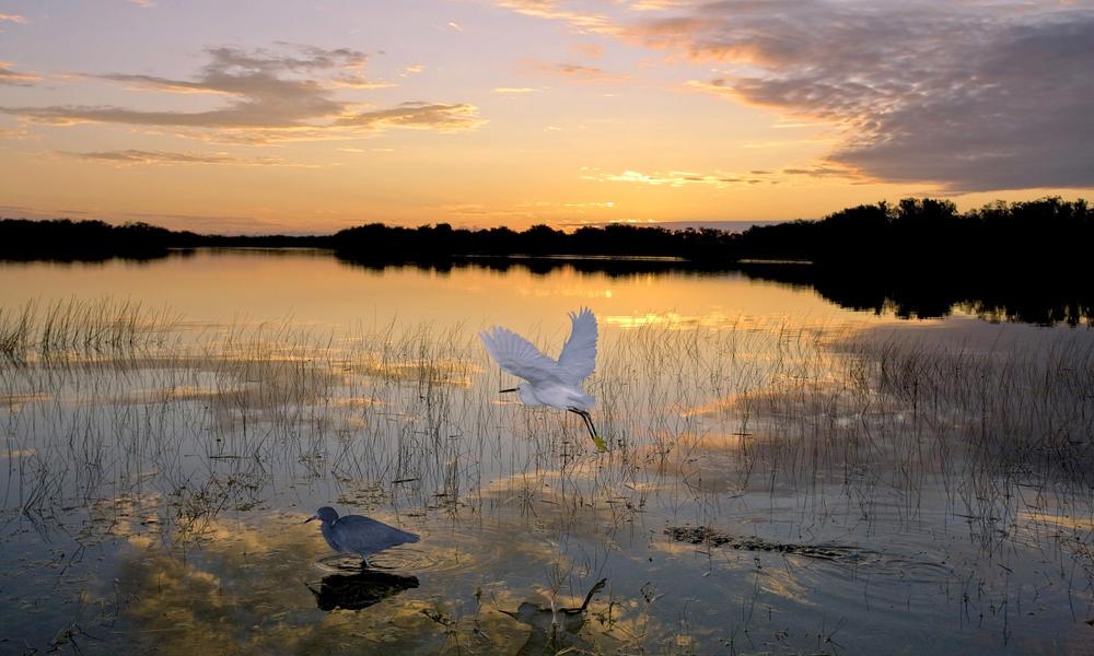 Farabee wetland spring2017