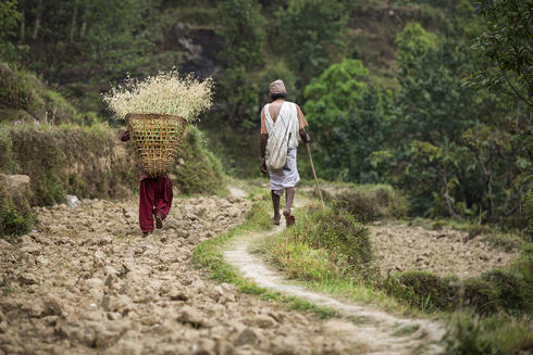 After a day's work monitoring the forest, Lila Ditra Poudel meets his granddaughter, who works in the terraced fields around Dhikurpokhari, to share the walk home.