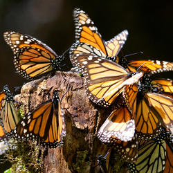 2017 monarchsweeps hero