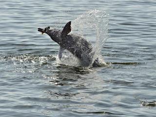 Dolphin_Magazine_Summer2017