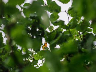 monarchs1_summer2017.jpg