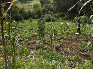 Repairing land that is vulnerable to erosion