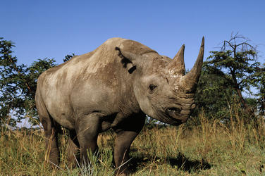 Black_rhino_8.6.2012_hero_and_circle_hi_48366