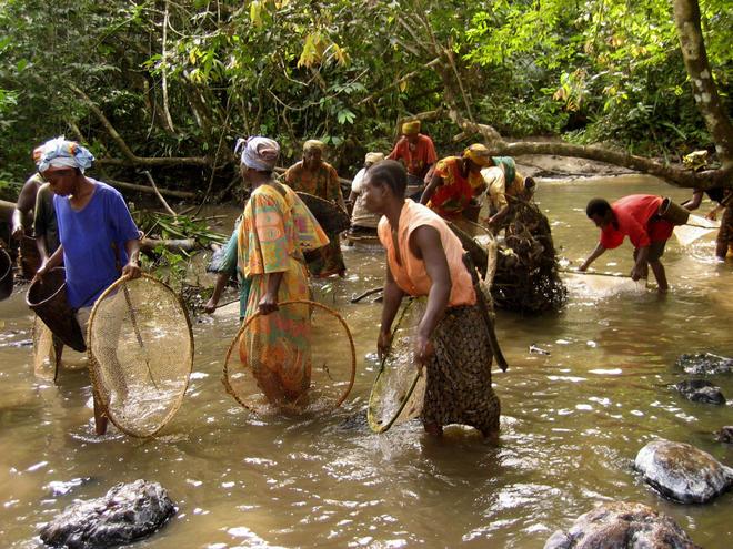 Bantou and Baka women fishing shrimps in a river on the edge of Lobéké National Park