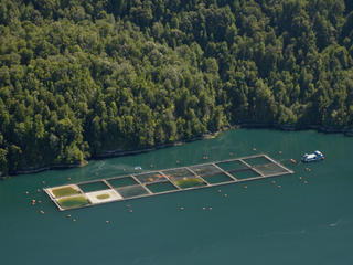 Saltwater salmon farm in Chile