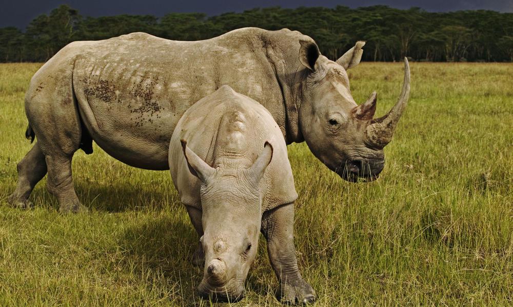 Rhinos_main_8.6.2012_stengthening_law_enforcement_hi_112396