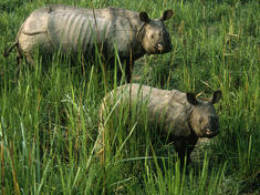 Rhinos_main_8.6.2012_threats_hi_108001